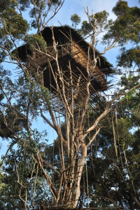 Environmental News Network - The incredible tree houses of the
