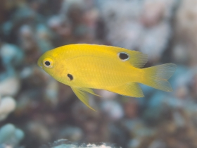 Wildlife And Habitat Conservation News Small Fish Develop