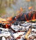 Effects of wood fuel burning have less of an impact on CO2 emissions than previously thought